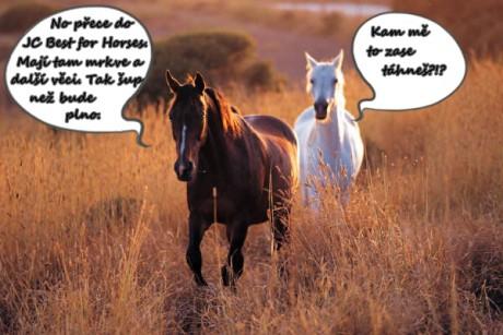 Milujeme koně!!!!! - Fotoalbum - Design na howrse - 2 koně v poli: www.annajana.estranky.cz/fotoalbum/design-na-howrse/2-kone-v-poli.html